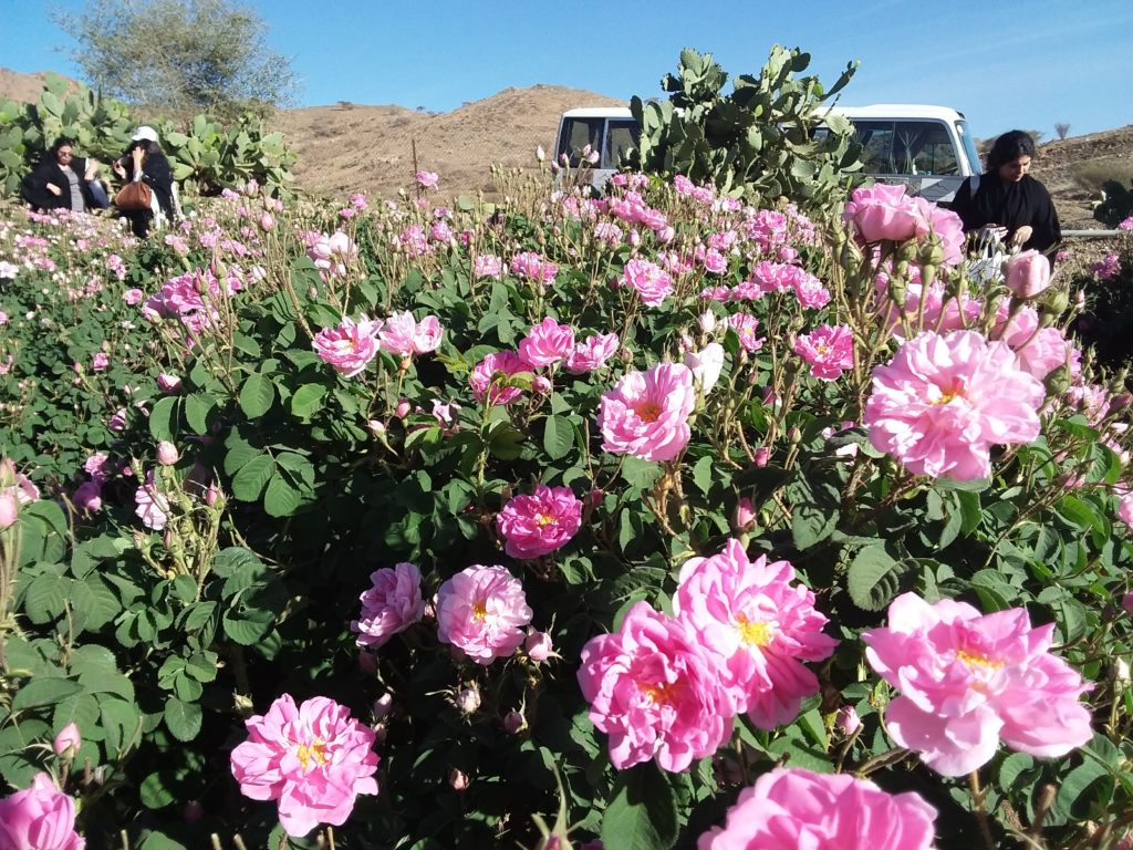 Taif Roses March 2018